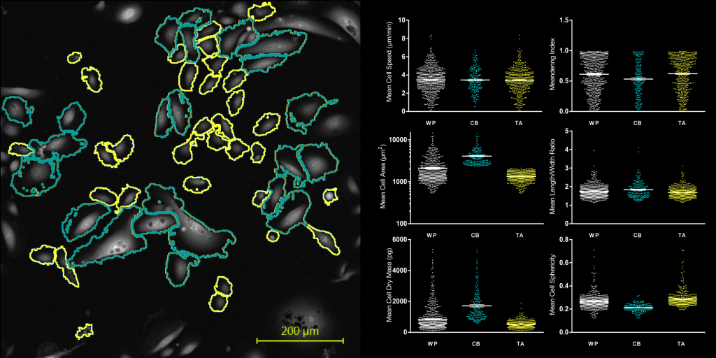 Individual cell segmentation of the TA and CB subpopulation within a heterogenous culture.
